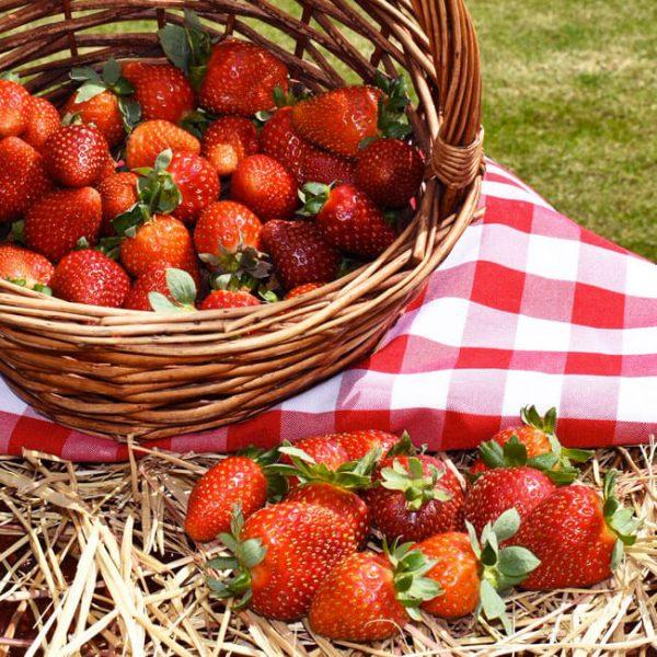 fresas-corso